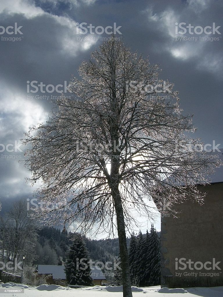 tree in araches stock photo