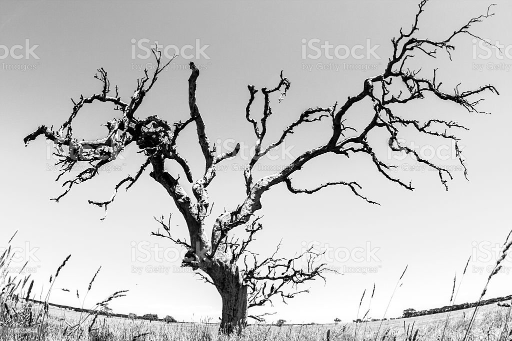 Tree in Australia's Northern Territory stock photo