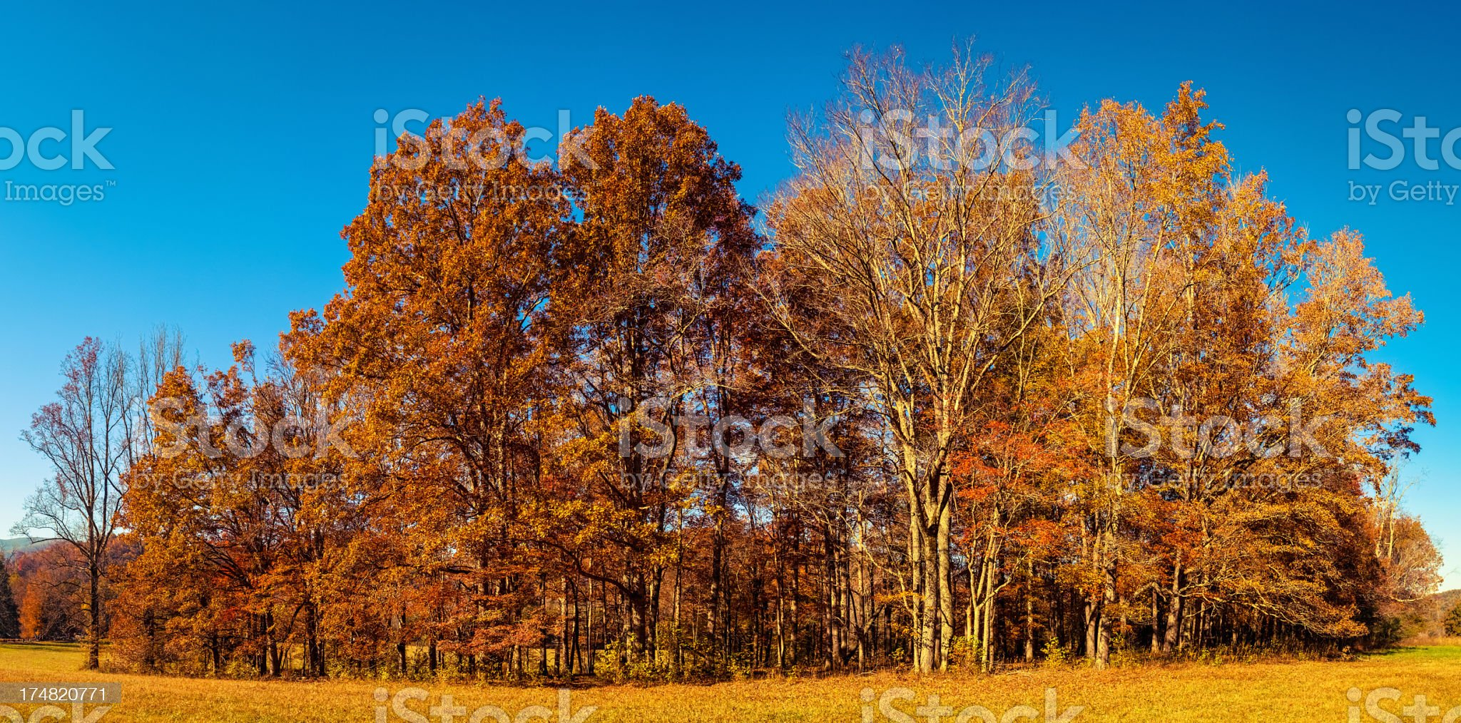 Tree in Autumn, Great Smoky Mountains, Cades Cove royalty-free stock photo