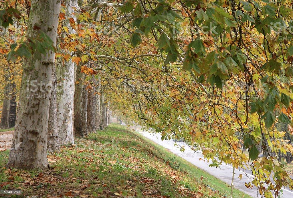 Tree in autumn royalty-free stock photo