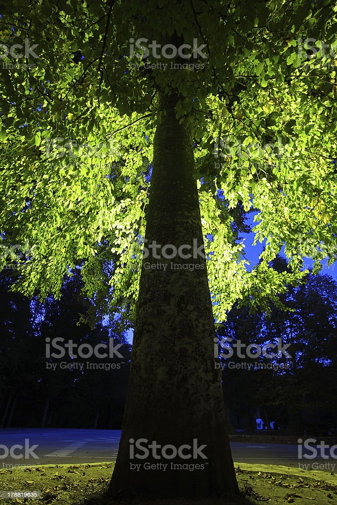 Tree in backlight royalty-free stock photo