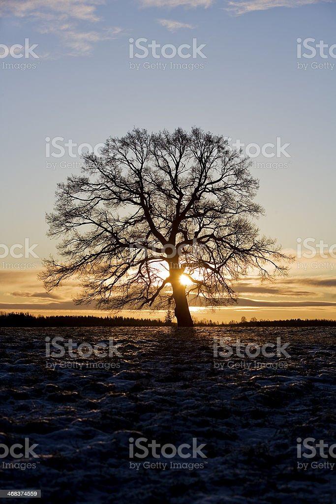 Tree in backlight stock photo