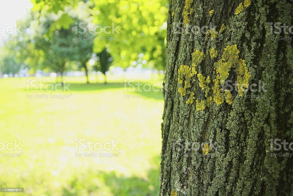 Baum im wunderschönen park Lizenzfreies stock-foto