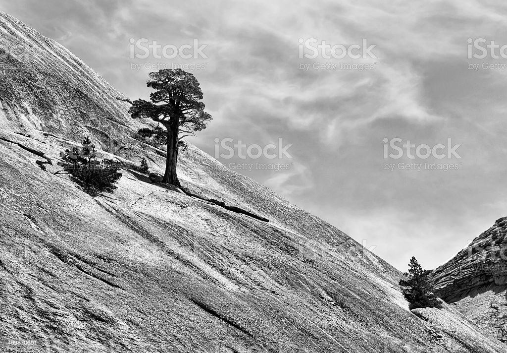 Tree in Black and White stock photo