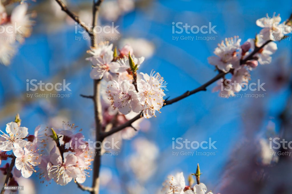 Tree in bloom stock photo