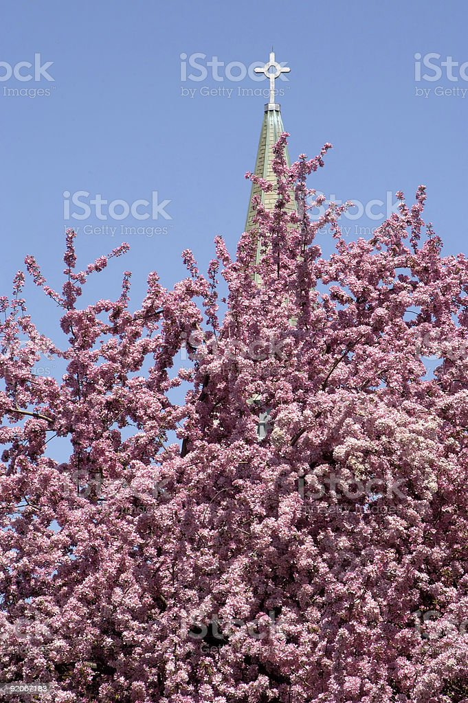 Tree in bloom royalty-free stock photo