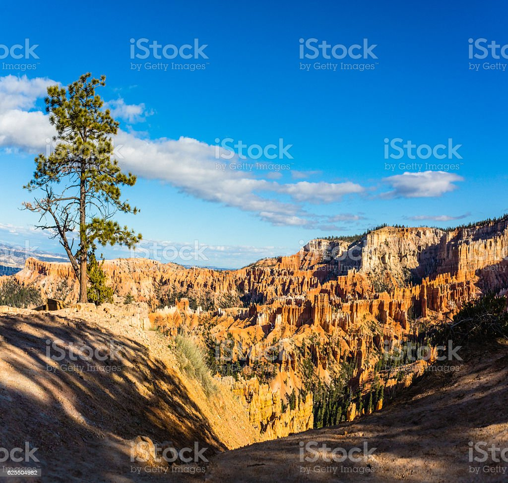 Tree in Bryce Canyon, USA stock photo