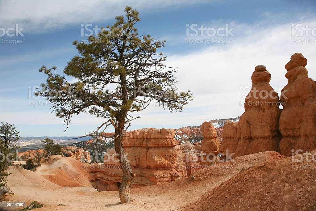 Tree in canyon within Bryce Canyon stock photo