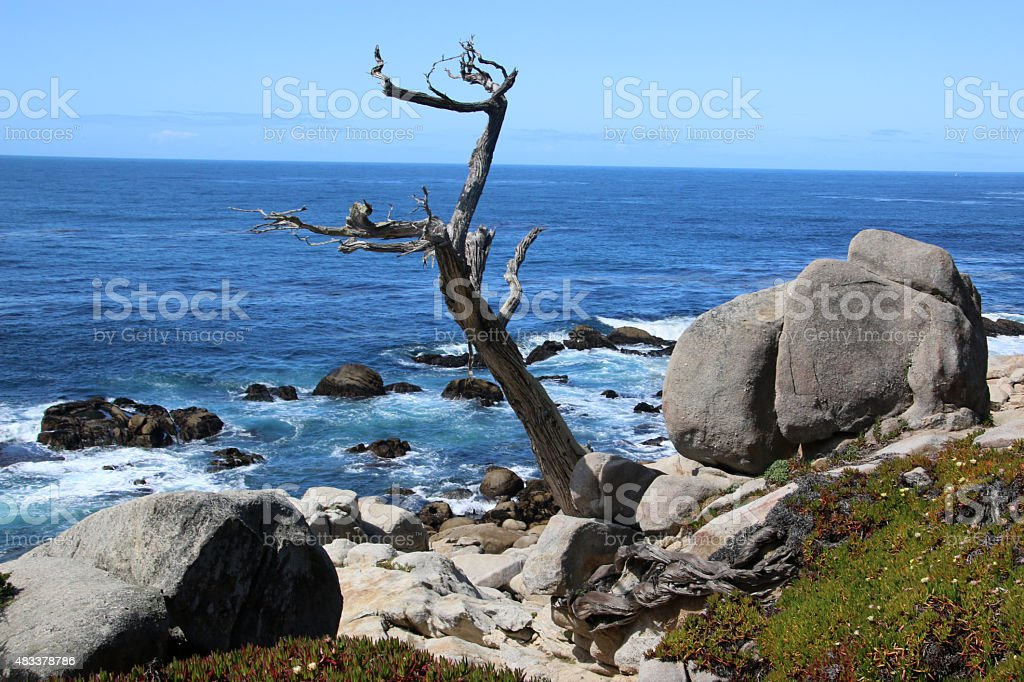 Tree in Carmel California on 17 Mile Highway stock photo