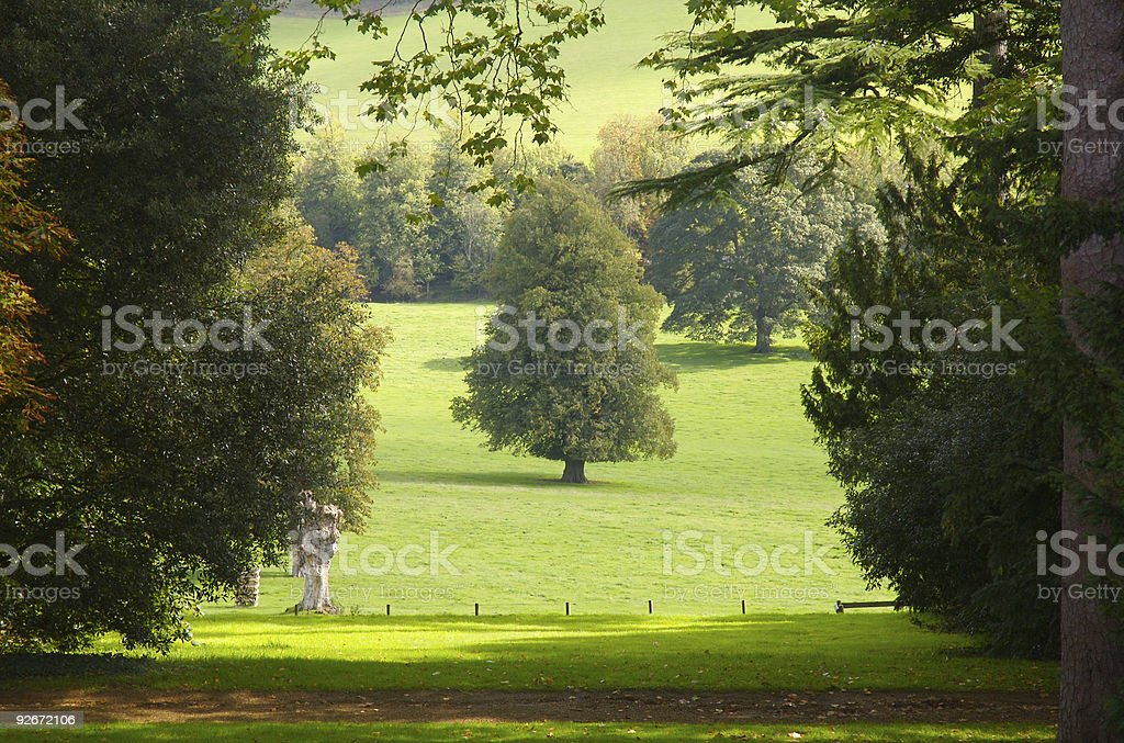 Tree in center surrounded by border of trees and path stock photo