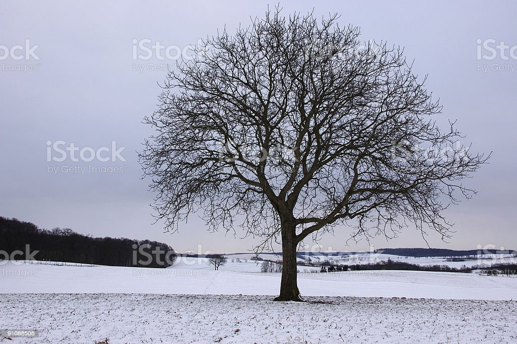 Tree in Cloudy Winter Morning royalty-free stock photo