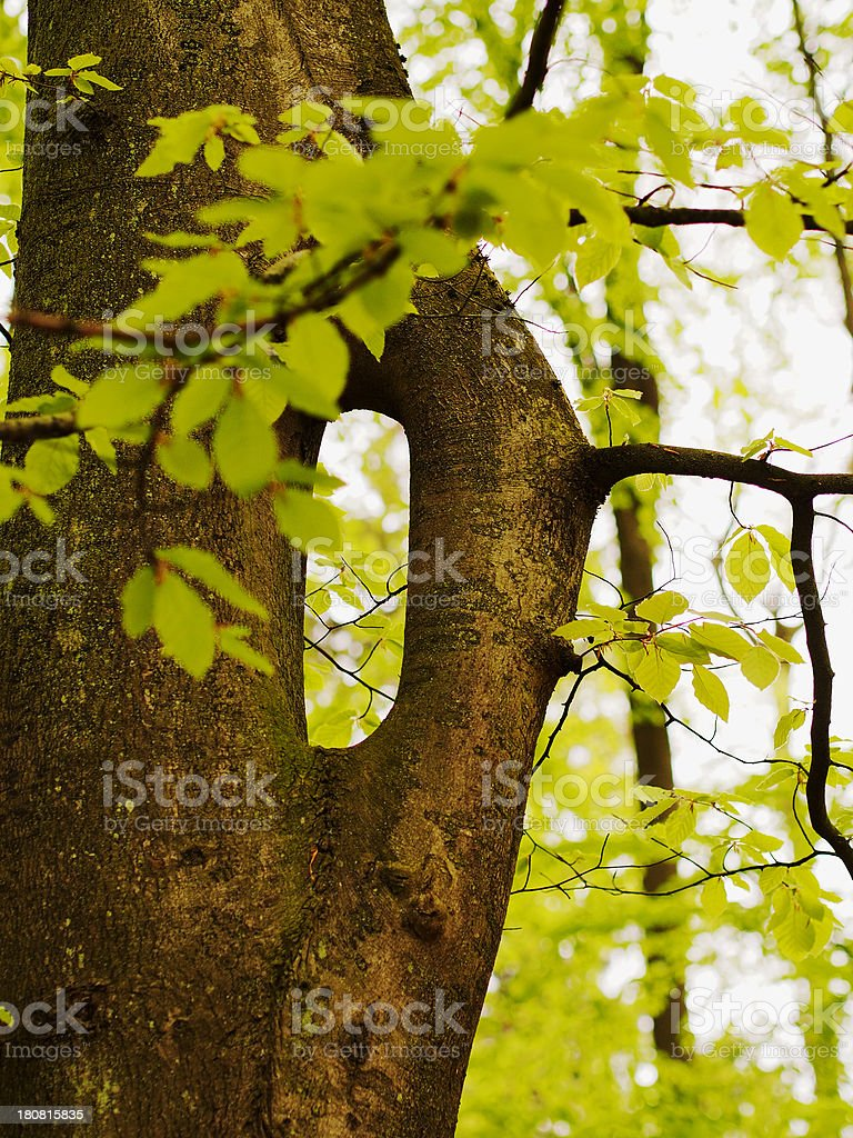 tree in detail royalty-free stock photo