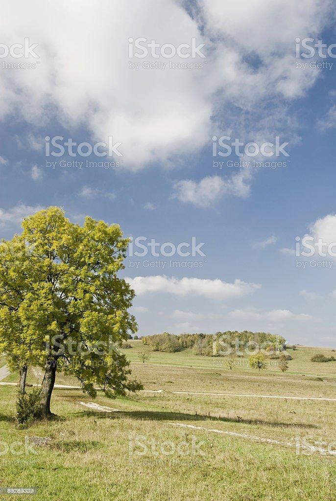 Tree in Fall stock photo