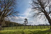 Tree in fenced field, two trees outside make an arch
