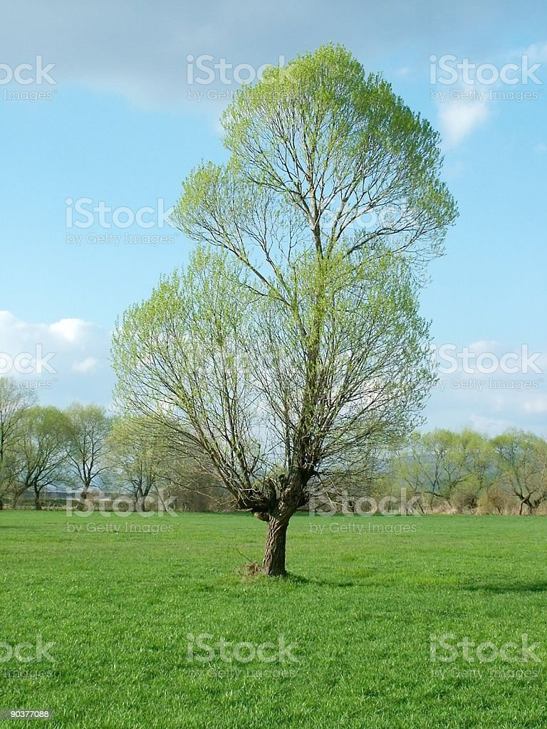 Tree in field royalty-free stock photo