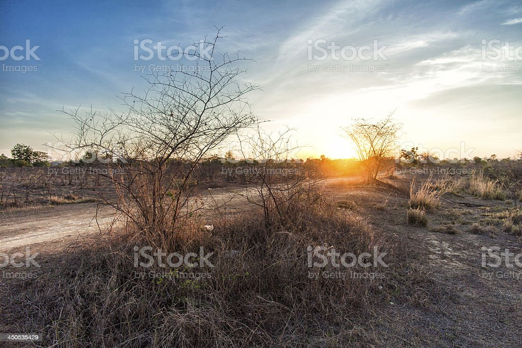 tree in field with sunset stock photo