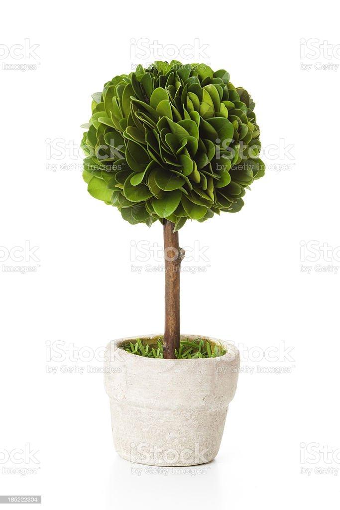 Tree in flowerpot stock photo