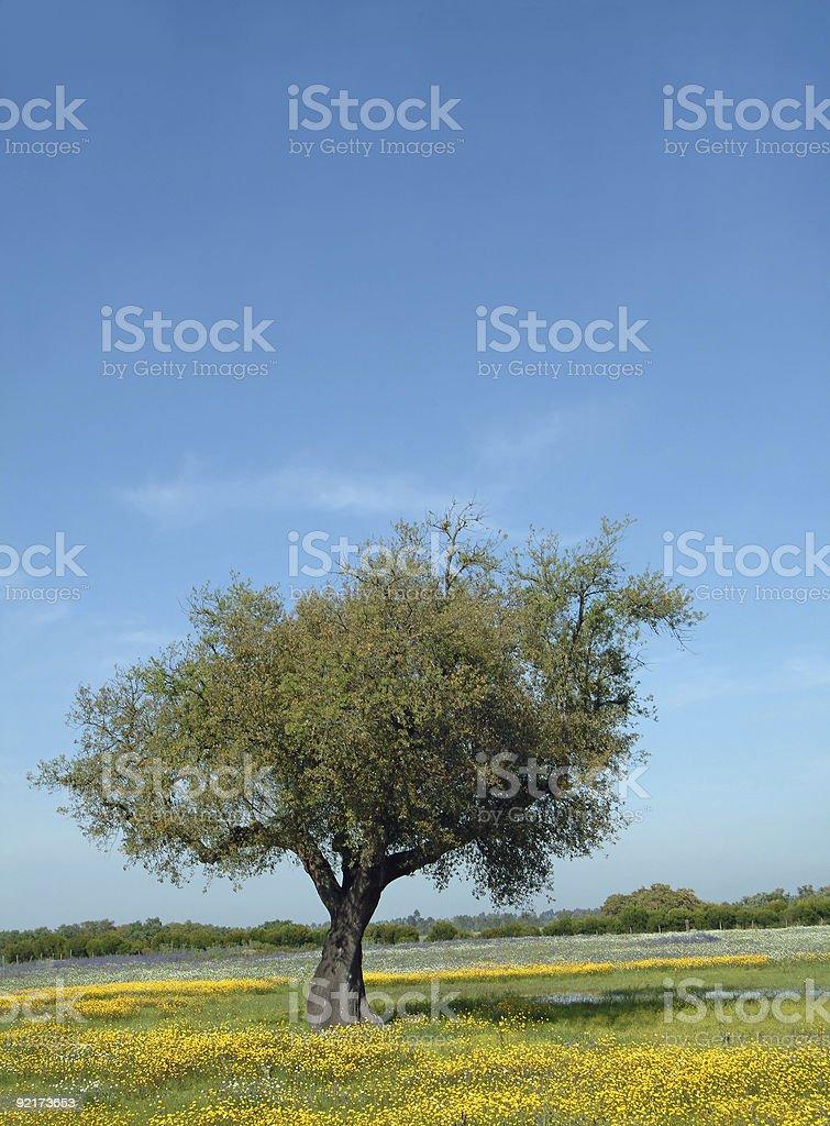 Tree in flowery field royalty-free stock photo