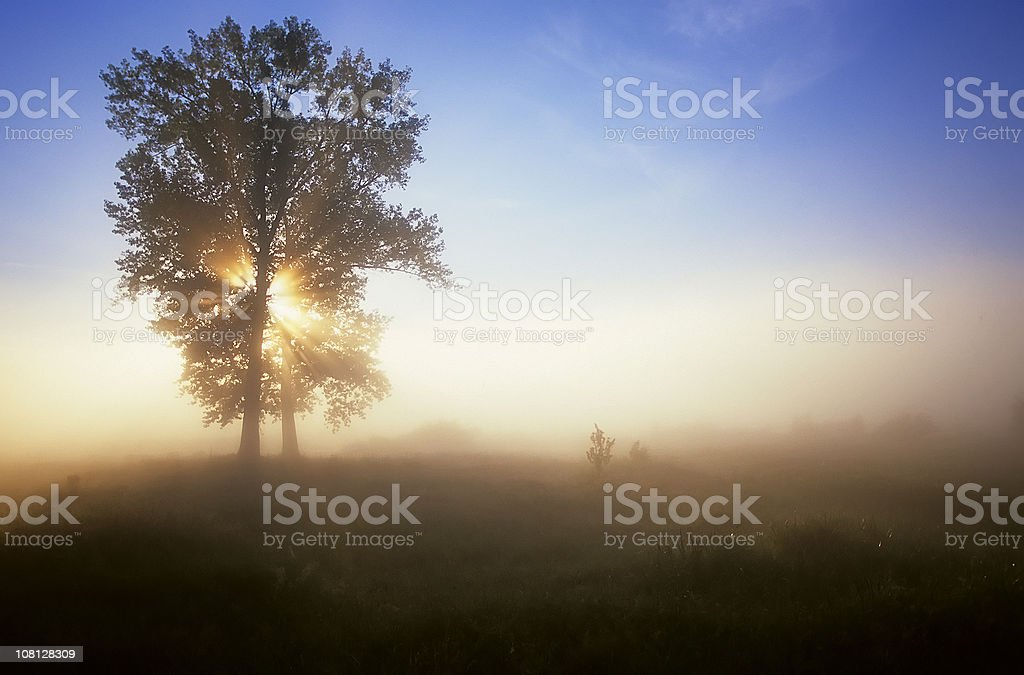 Tree in fog royalty-free stock photo