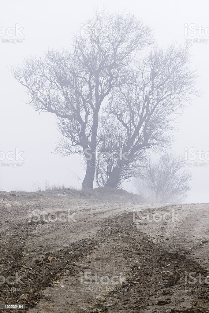 tree in fog royalty-free stock photo