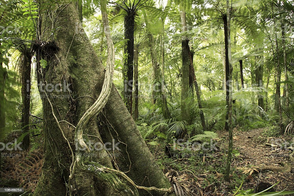 Tree in forest royalty-free stock photo