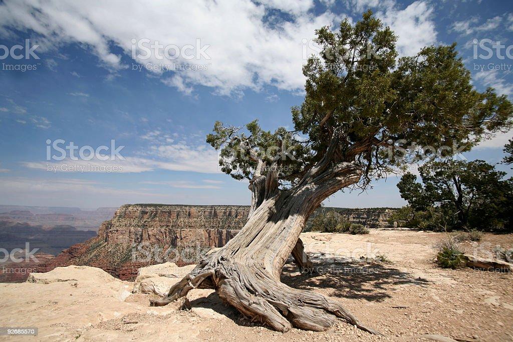 Tree in Grand Canyon, Arizona, USA royalty-free stock photo