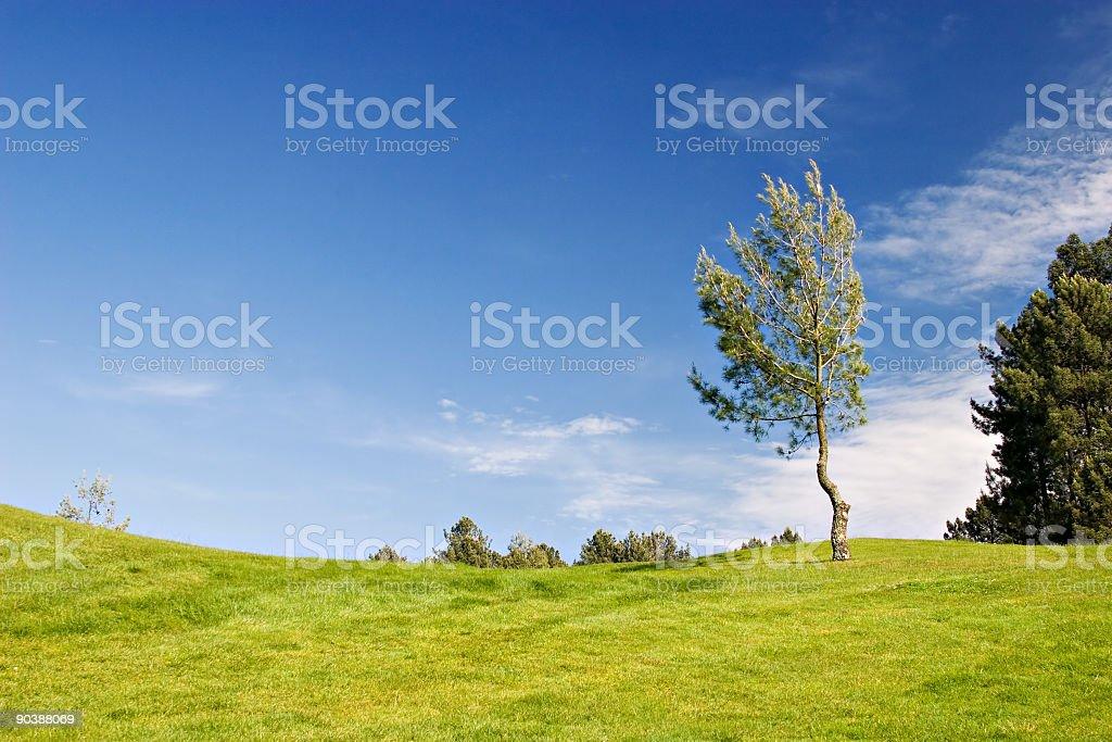 Tree in green field royalty-free stock photo