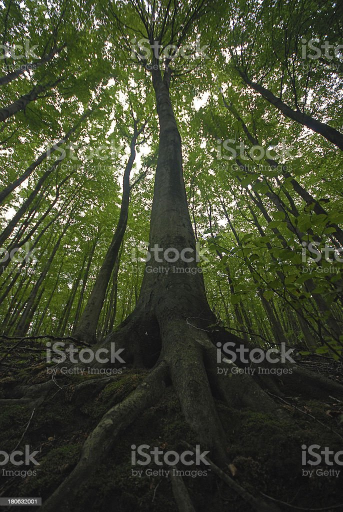 tree in green forest royalty-free stock photo
