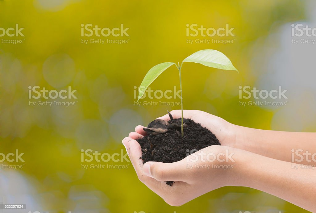 Tree in hand isolate on blur background with clipping path, stock photo