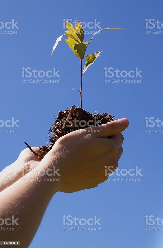 Tree in Hand royalty-free stock photo