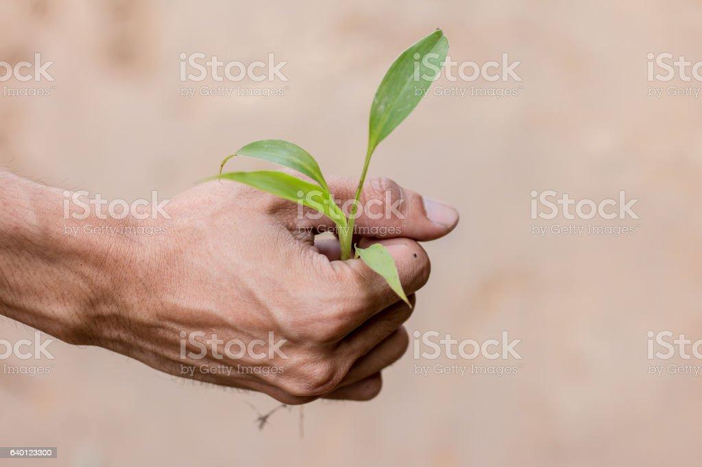 Tree in hand stock photo