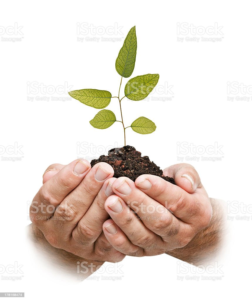 tree in hands royalty-free stock photo