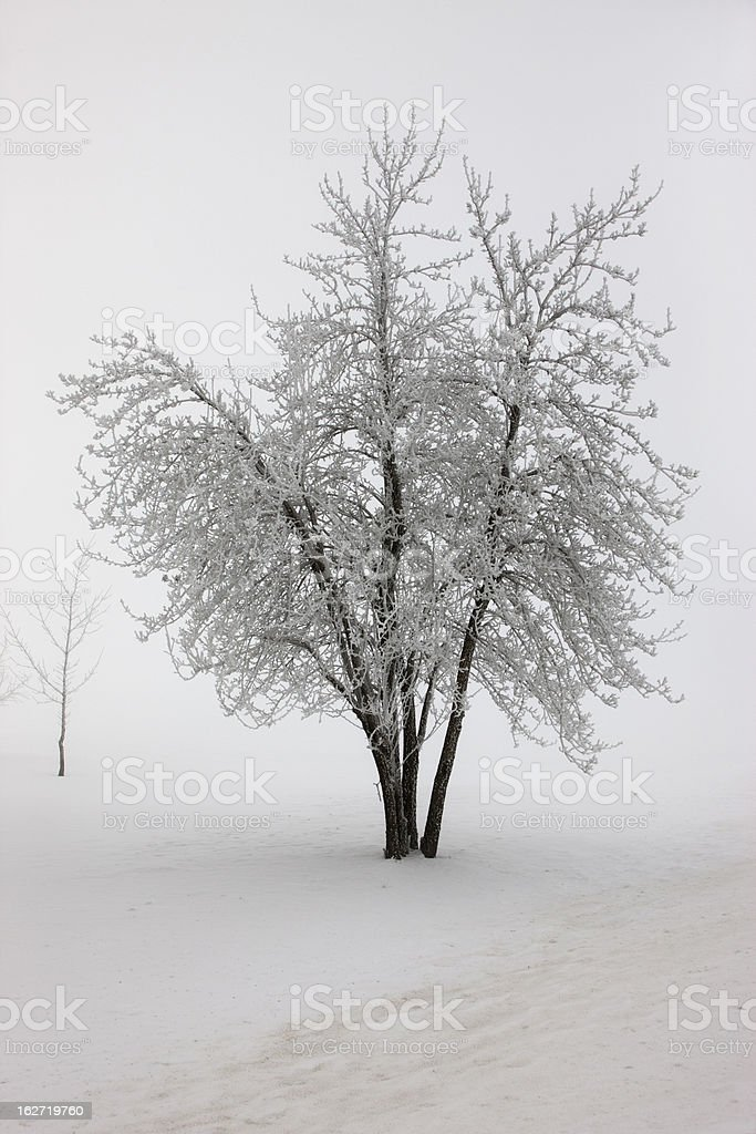 Tree in heavy fog during winter. royalty-free stock photo