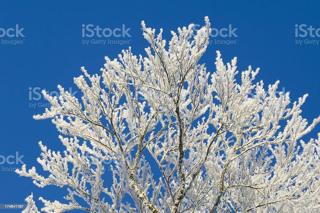 Tree in heavy frost royalty-free stock photo