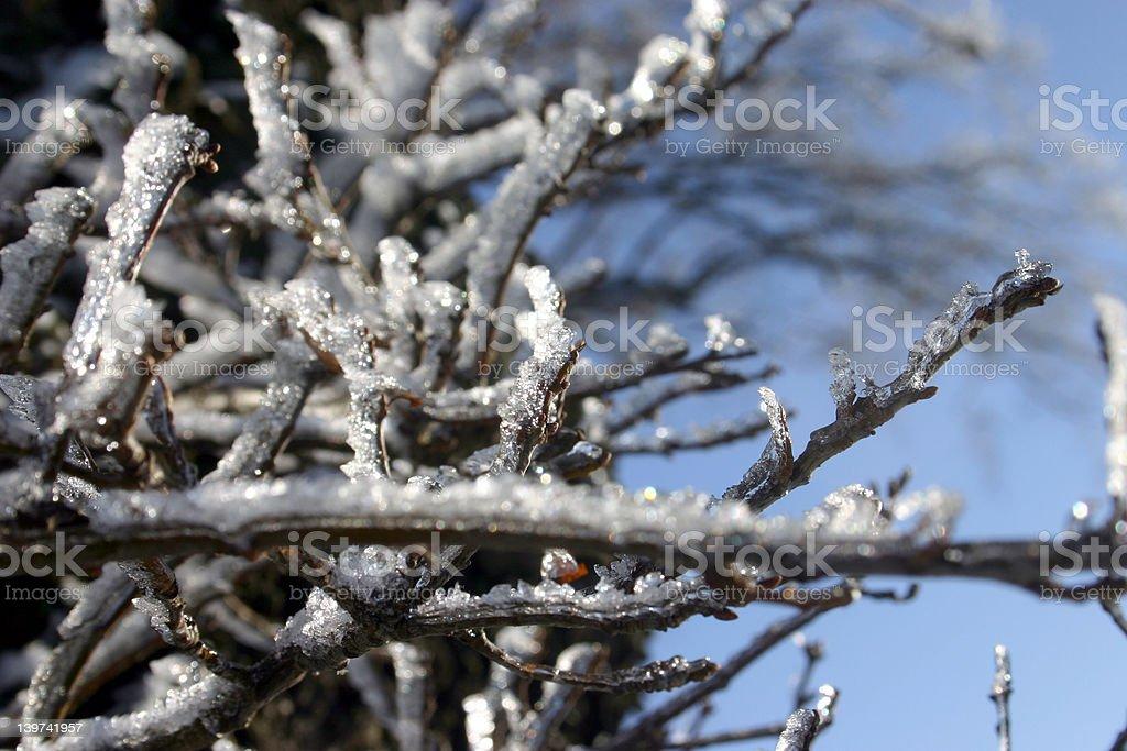 木の氷 ロイヤリティフリーストックフォト