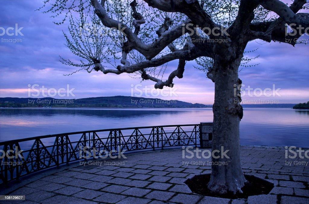 Tree in Lakeside Park stock photo