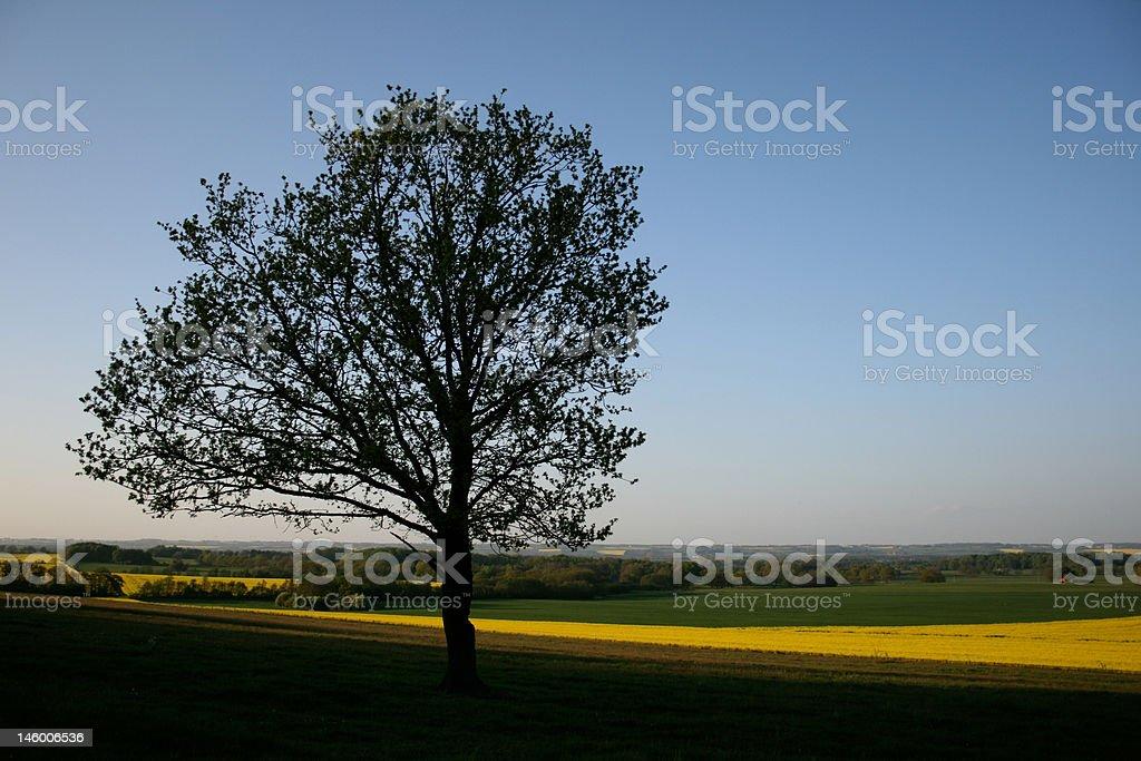 Tree in meadow stock photo