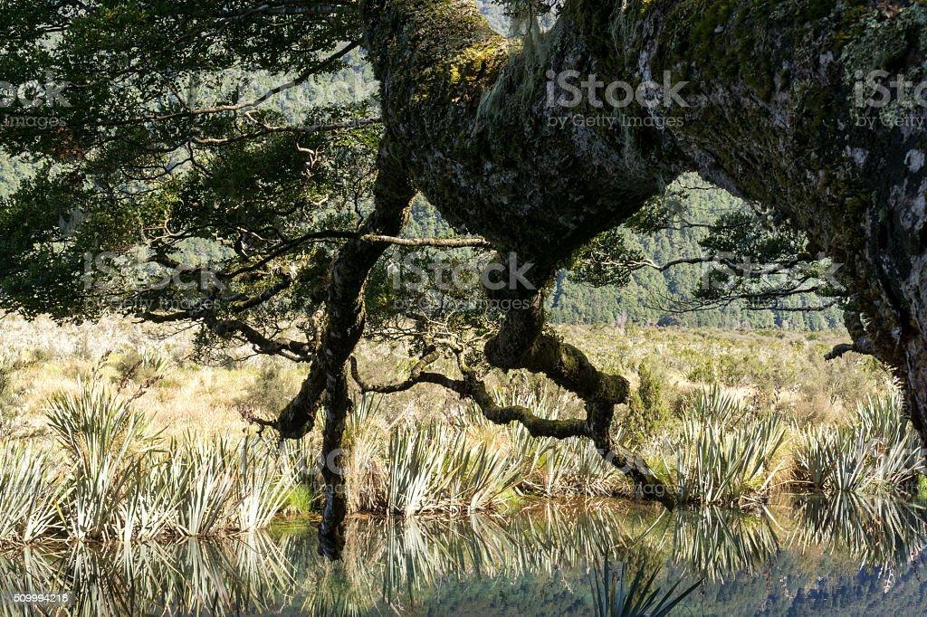 tree in mirror lake stock photo