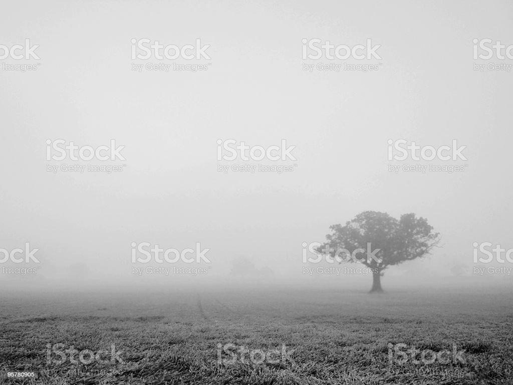 Tree in Mist royalty-free stock photo