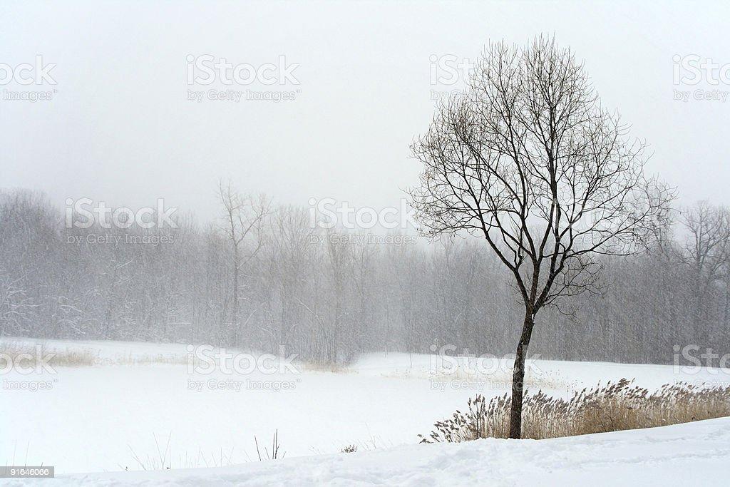 Tree in misty haze of winter blizzard royalty-free stock photo