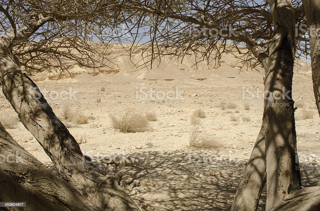 Tree in Negev Desert stock photo
