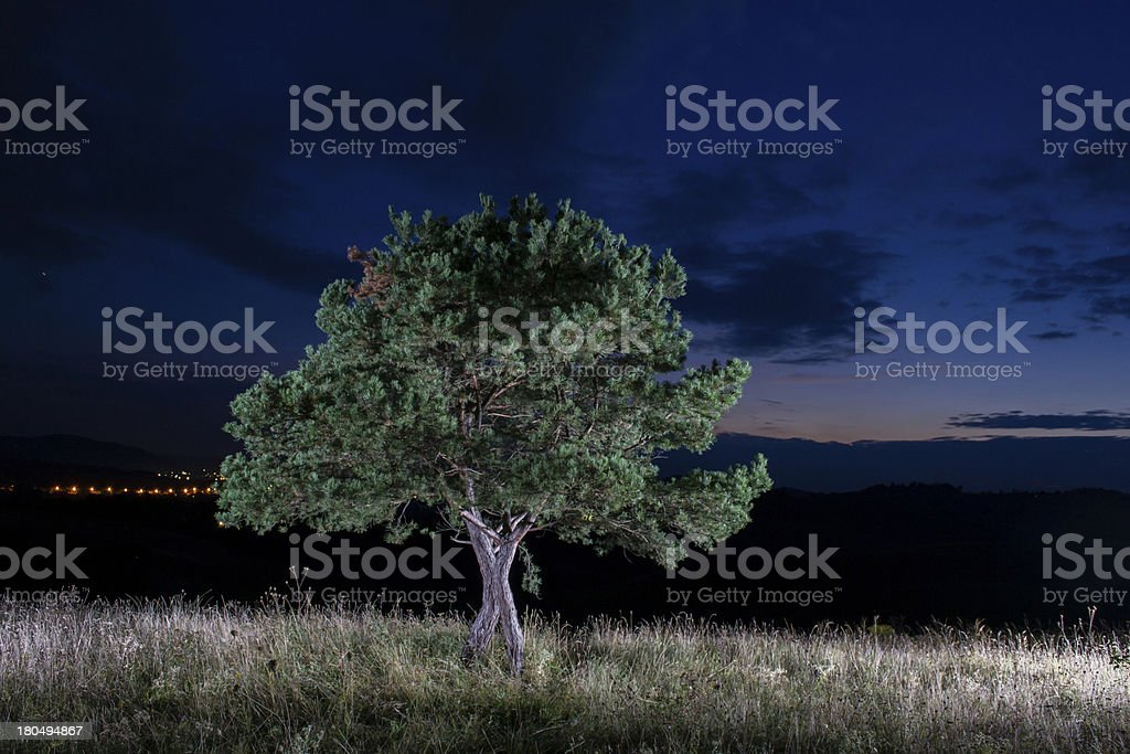 tree in night royalty-free stock photo