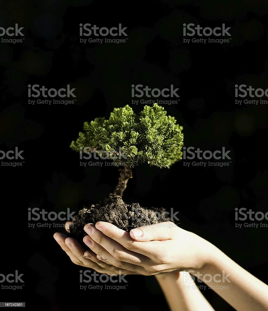 Tree in palm of hand royalty-free stock photo