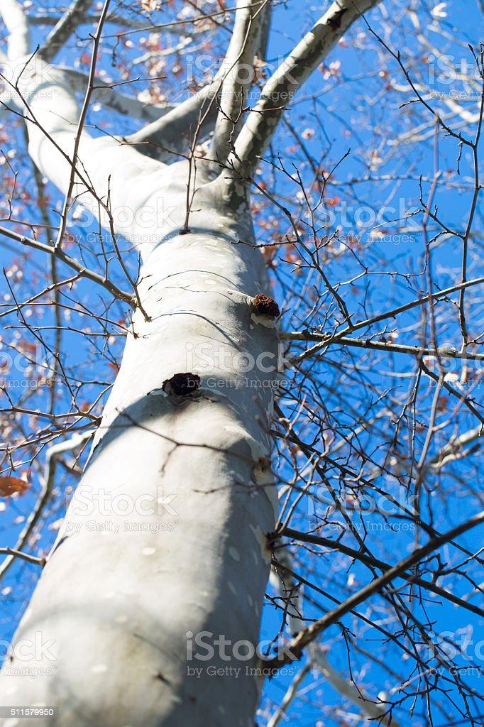 Tree in park against the dark blue sky stock photo