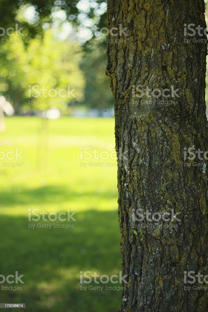 Baum im park Lizenzfreies stock-foto