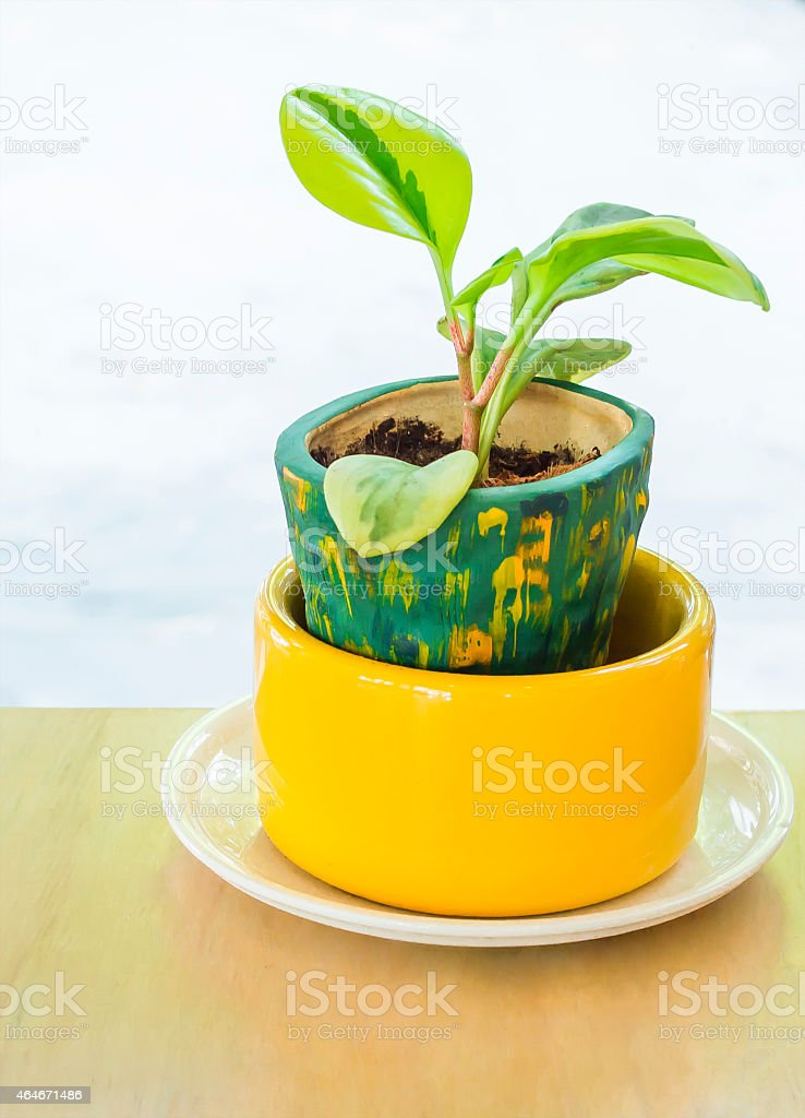 Tree in pots on wood  table stock photo