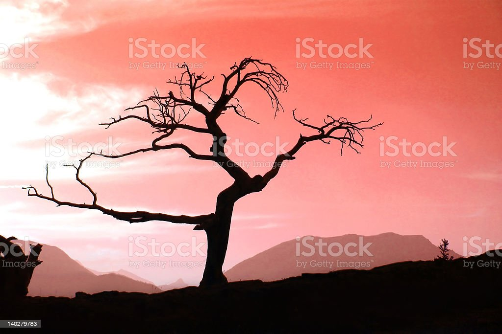 Tree in red sunset royalty-free stock photo