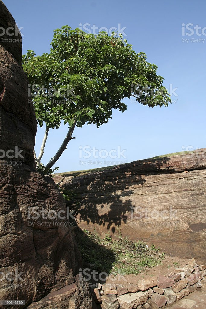 Tree in Rock Crevice stock photo