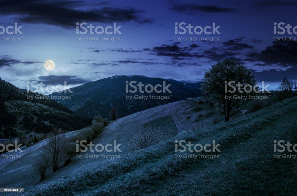 tree in rural area on beautiful springtime at night stock photo