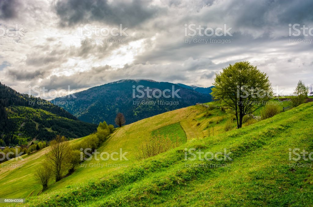 tree in rural area on beautiful springtime day stock photo
